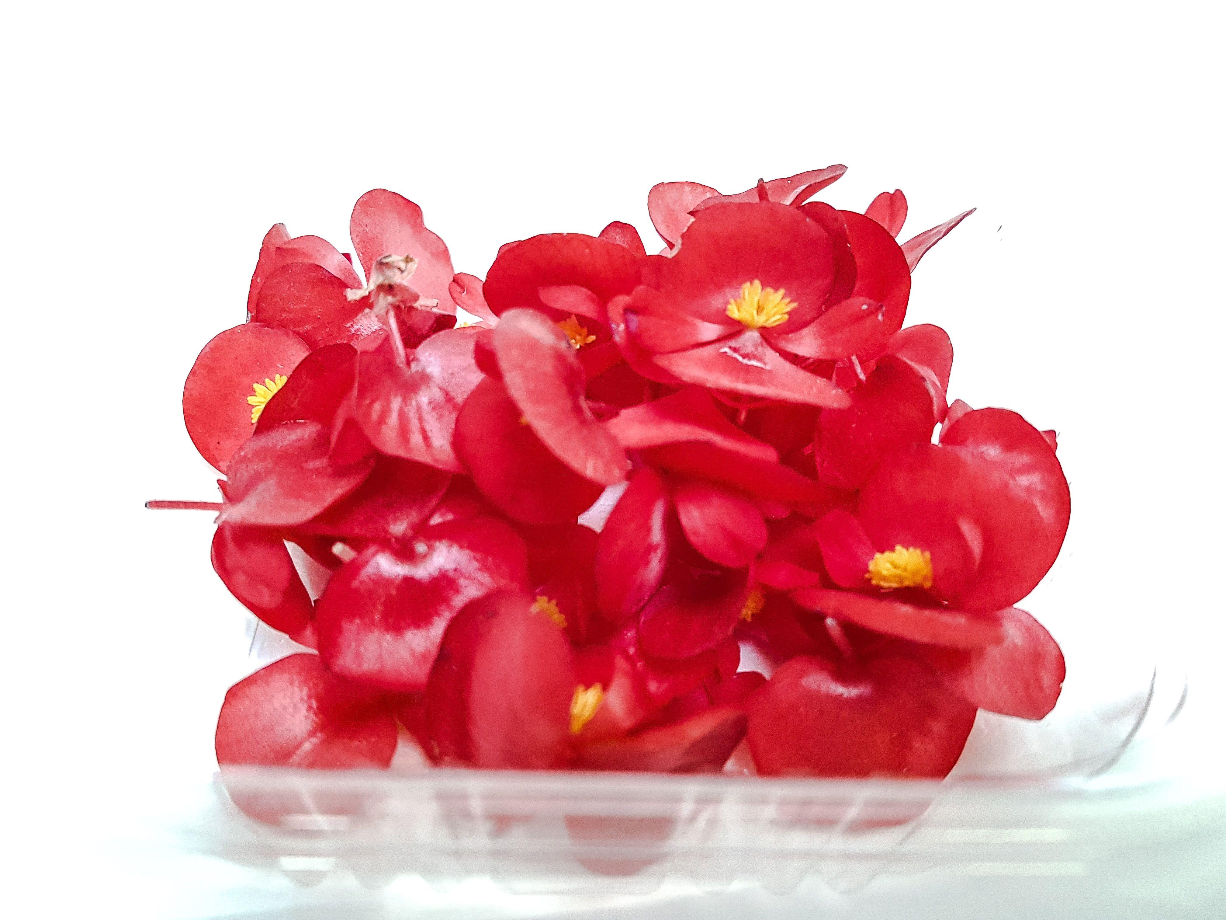 Begonia - Foto: Pinterest