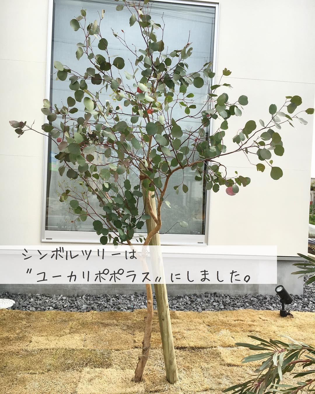 Yuifu On Instagram わが家のシンボルツリー