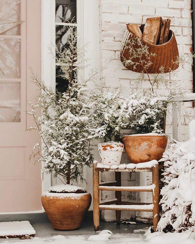 winter porch Stink bugs, Winter porch, Ladder decor