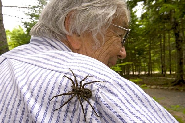 Wolf Spiders Dock Spiders Or Fishing Spiders A Comparison Plus My Meeting With A Giant Wolf Spider Wolf Spider Spider Types Of Spiders