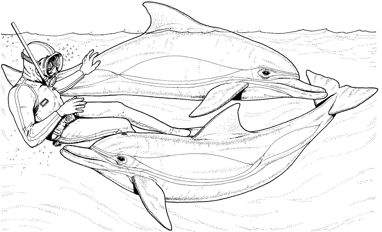 Bottlenose Dolphin Coloring Pages Free Dolphin Coloring Pages