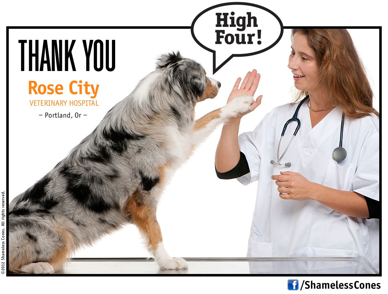 Rose City Veterinary Hospital in Portland, OR. Give 'em a