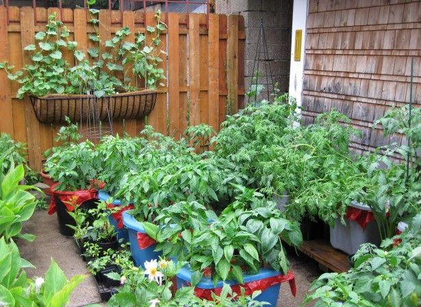 Garden Landscaping Backyard Vegetable Gardens Container