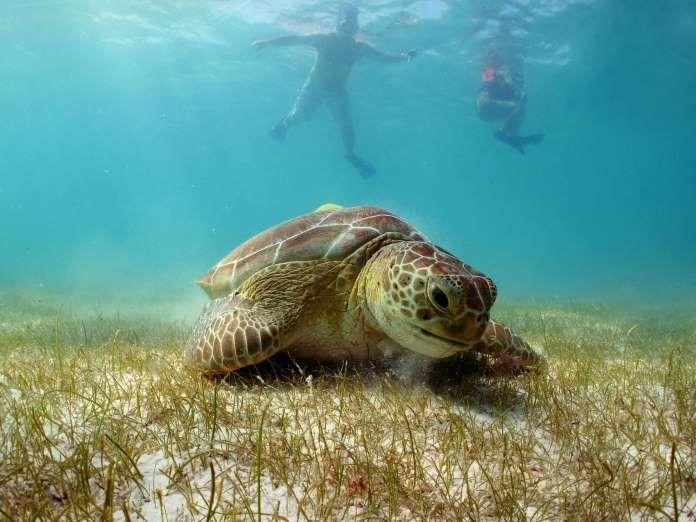 Há vários lugares para fazer snorkel nas costas leste e oeste do México. Riviera Maya tem algus dos ... - Shutterstock