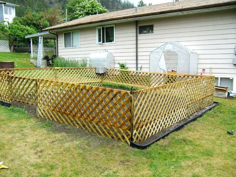 Lattice Fence Around Veggie Garden Lattice Fence Lattice Garden
