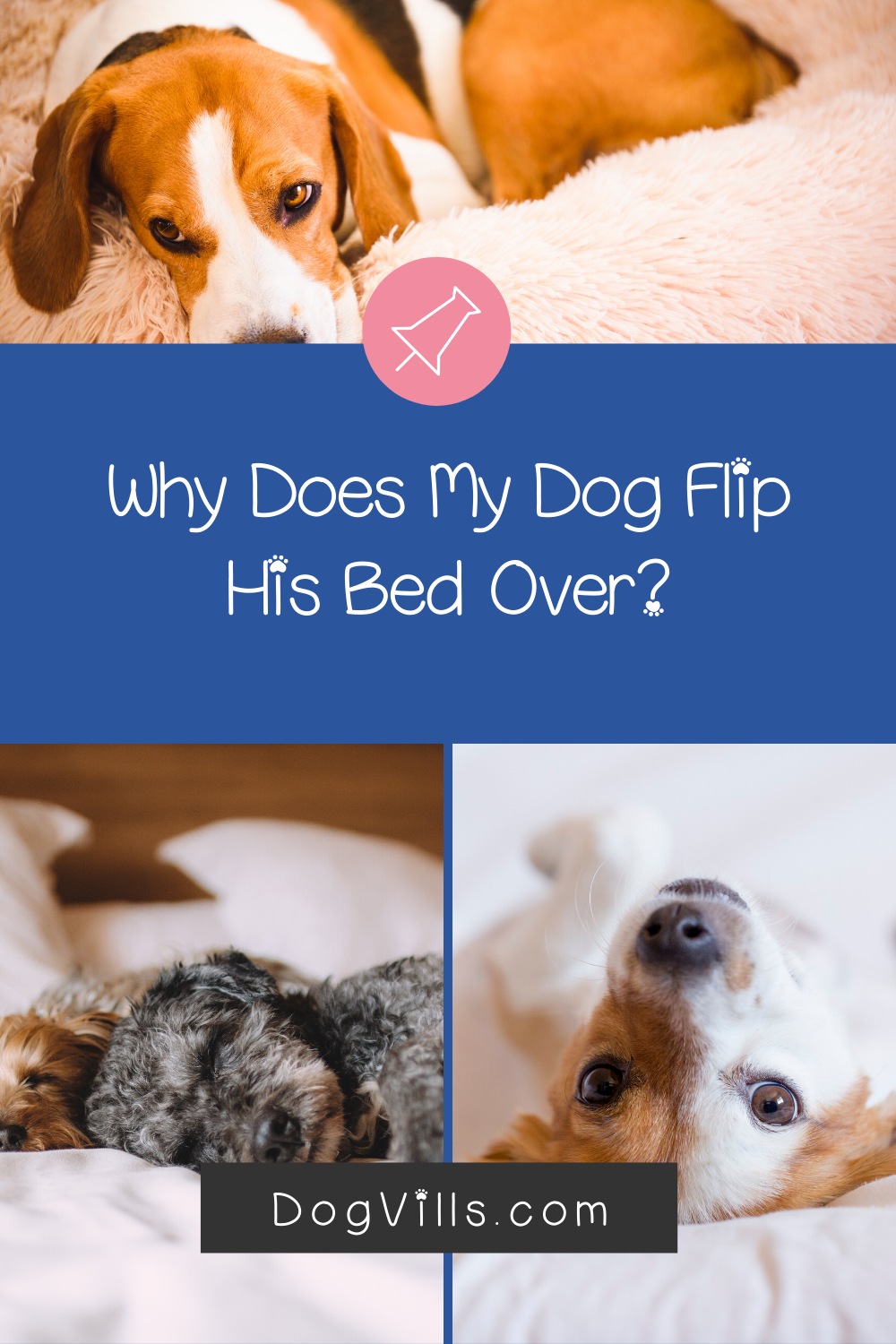 10 Reasons Why Your Dog Flips His Bed Over Dog Behavior Training Dogs Your Dog