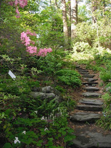 Giw Framingham Garden In The Woods Landscaping Plants Shade Garden