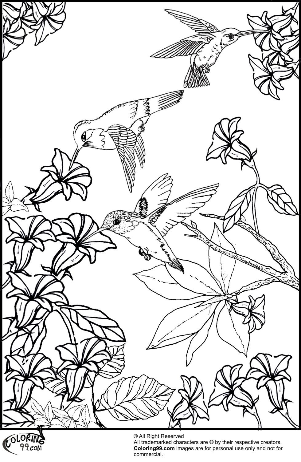 Hummingbirds and Flower Coloring Pages | Misc | Bird ...