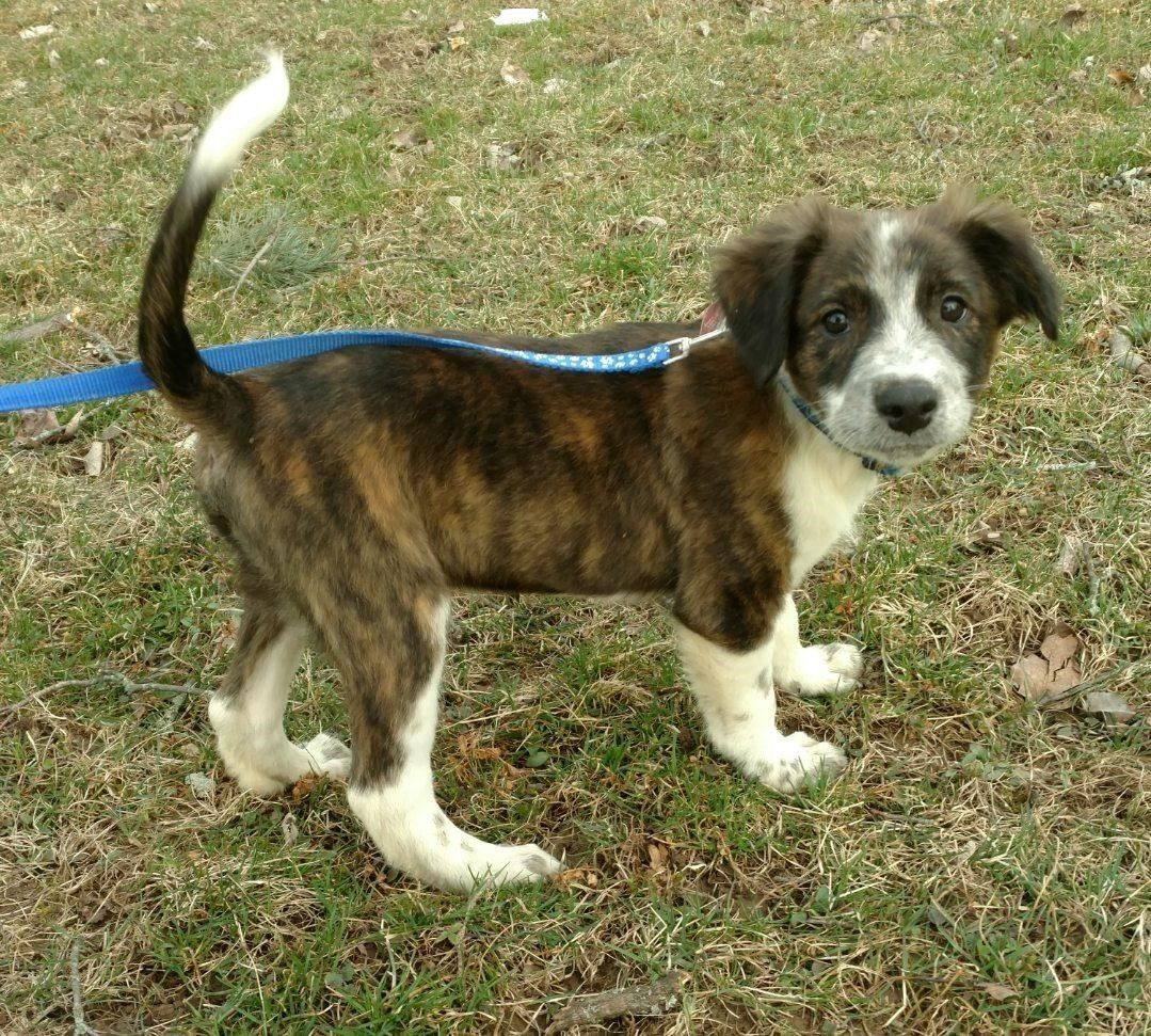 Adopt Buster on Petfinder Big fluffy dogs, Big fluffy