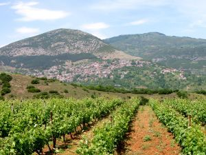 Wine of Macedonia, Greece