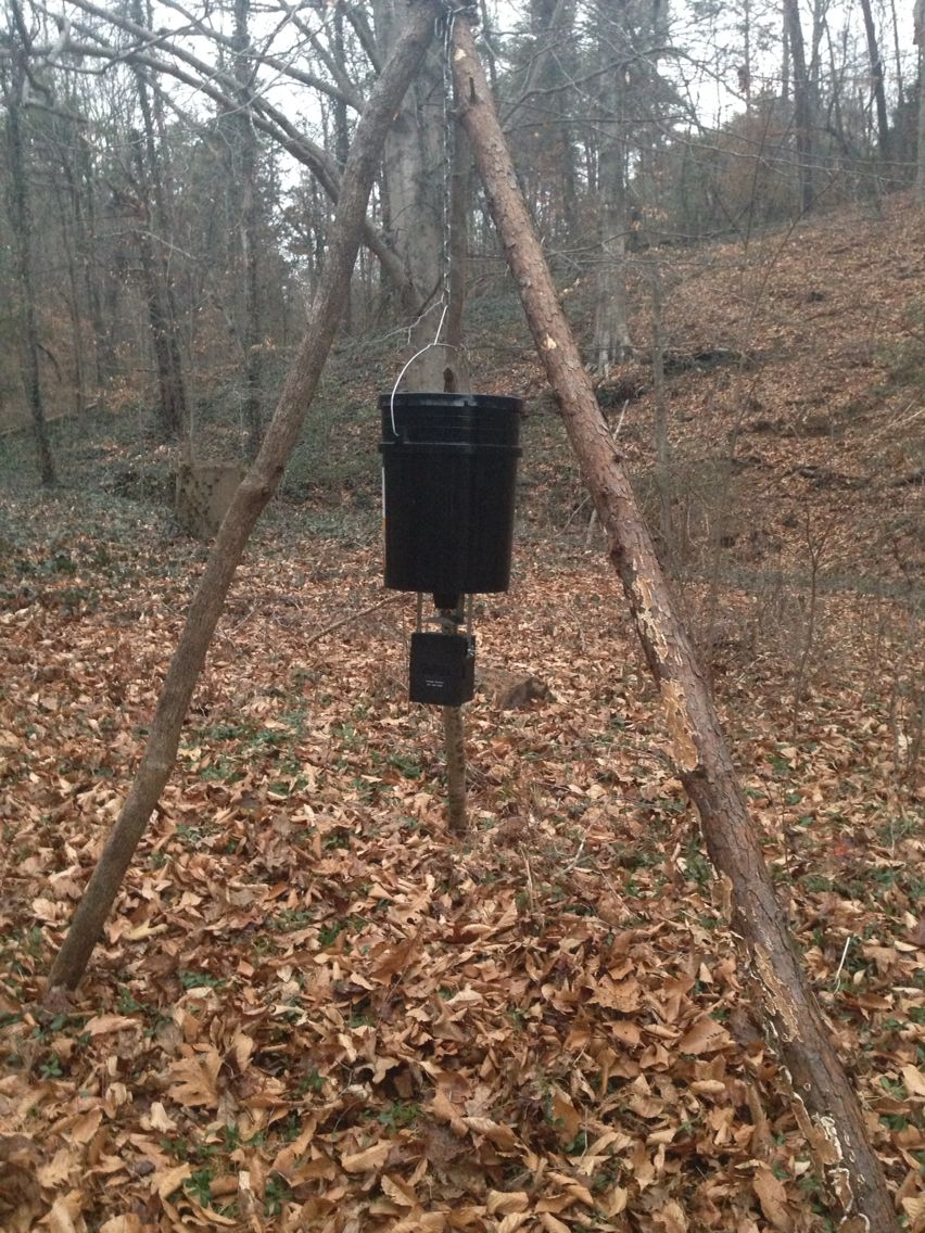Deer feeder with stand made from 3 big branches spare