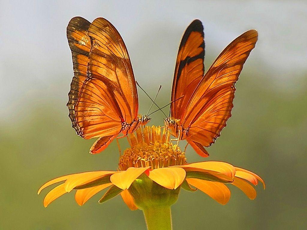 Fotografias De Mariposas Y Flores: Increíbles Imágenes De Mariposas