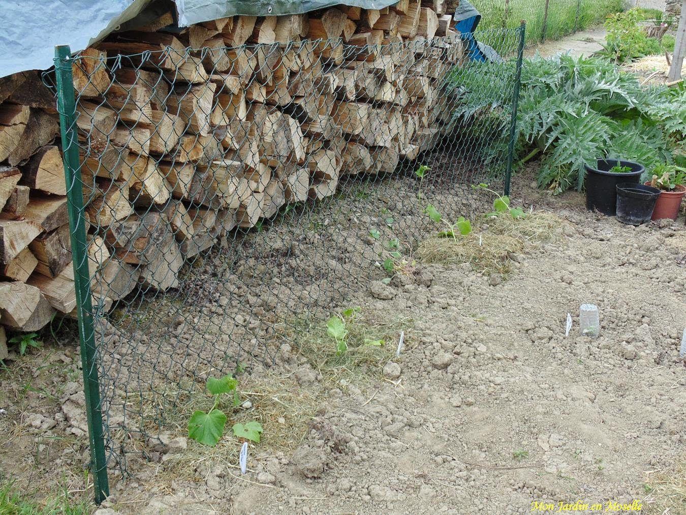 Mon Jardin en Moselle - pan de grillage pour les concombres et ...