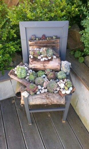 Alter Stuhl bepflanzt mit Hauswurz deko Sukkulenten