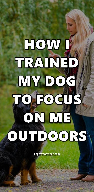 Pin By Jodi Graver On Pet Stuff Dog Training Dogs Dog Care