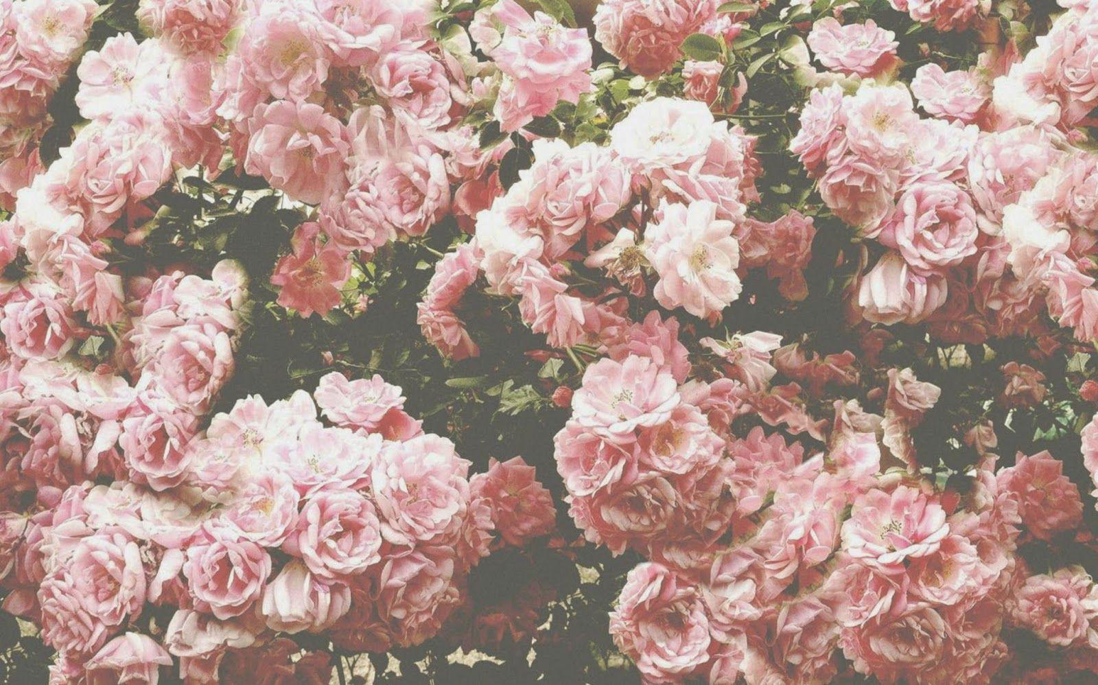 розовые картинки для твиттера это самом деле