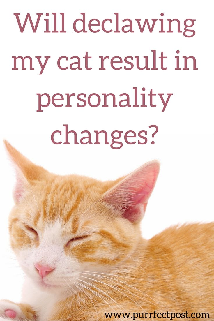 The Reason Most People Consider Having The Claws Of Their Tiny New Bundle Of Fur Removed Is To Save Their Furniture And Othe Cat Health Cat Behavior Pet Health