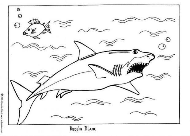 Coloriage du grand requin blanc au milieu de l 39 oc an un coloriage pour les enfants pour leurs - Dessin de grand requin blanc ...