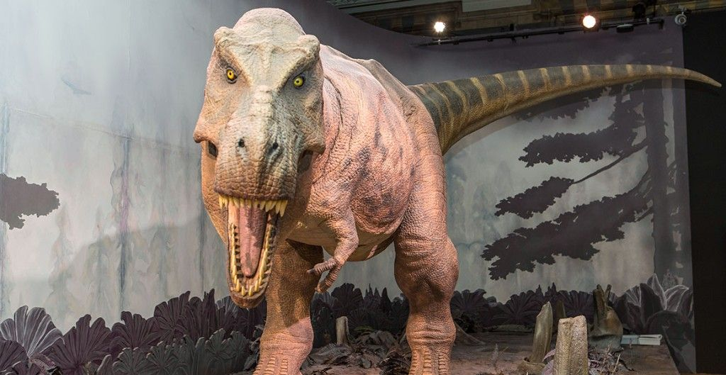 T Rex Dinosaur Gallery Full Width Natural History Museum London Dino Museum Dinosaur