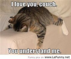 Image result for couch potato funny
