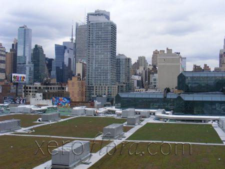 Xero Flor Green Roof Projects Javits 1 Jpg 450 338 Green Roof Project Green Roof Green