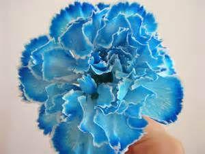 Blue Carnation Yahoo Image Search Results Claveles Flores Imagenes De Flores