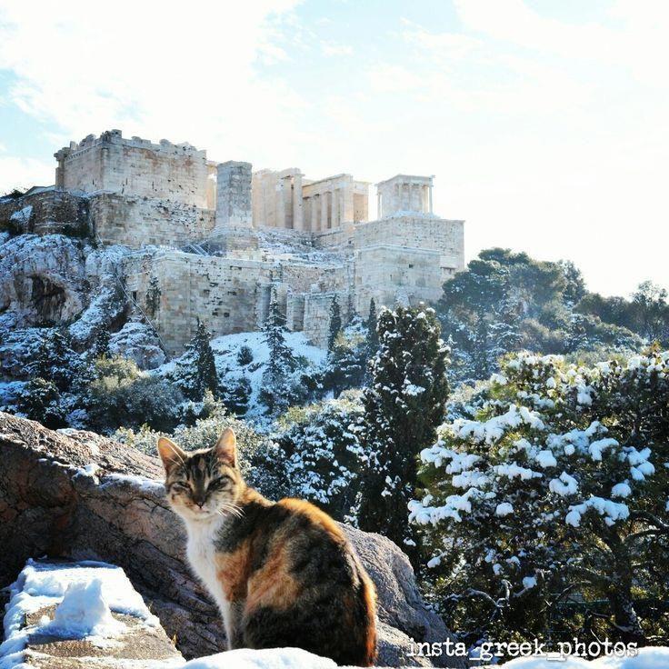Ποζάροντας στην Ακρόπολη cat cats lovelycat lovelycats