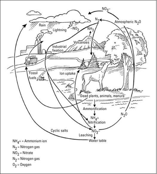 Discovering the Biogeochemical Cycles - For Dummies | Science ...