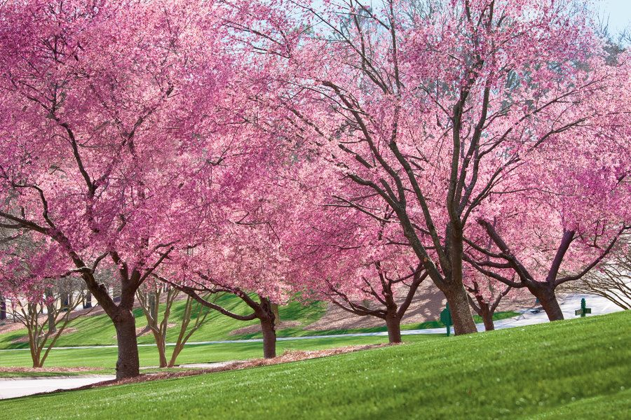 The Most Iconic Southern Plants Spring Blooming Trees Spring Flowering Trees Blooming Trees