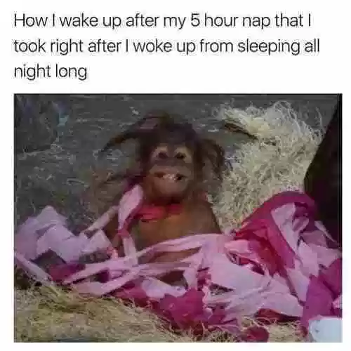26 Wake Up Memes To Make Your Day Awesome Ladnow Memes Wake Up Wake