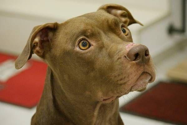 Wien 11. Bezirk Hund aus verwahrloster Wohnung gerettet