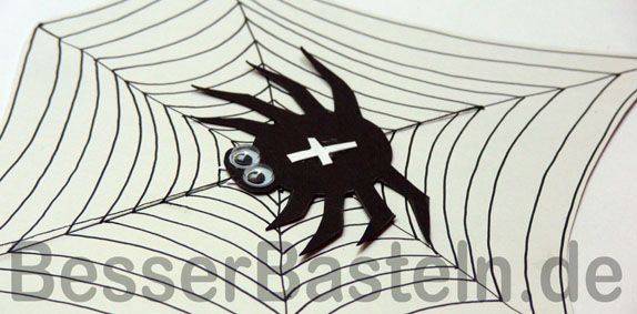 Spinne auf Spinnennetz