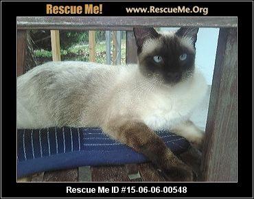 Florida Siamese Rescue Adoptions Rescueme Org Siamese Rescue Siamese Siamese Cats