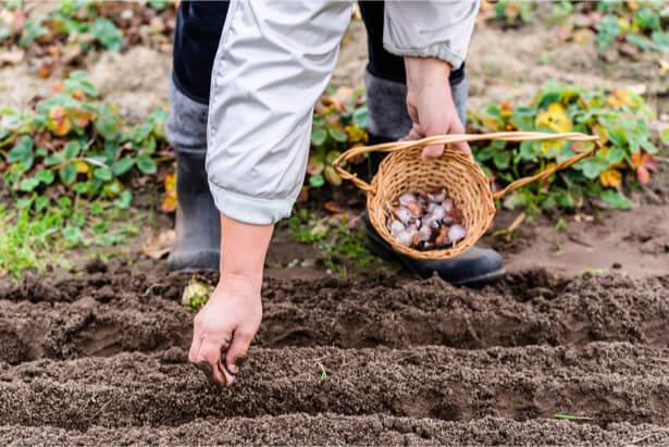 Faire son jardin d'automne que planter en octobre, semis