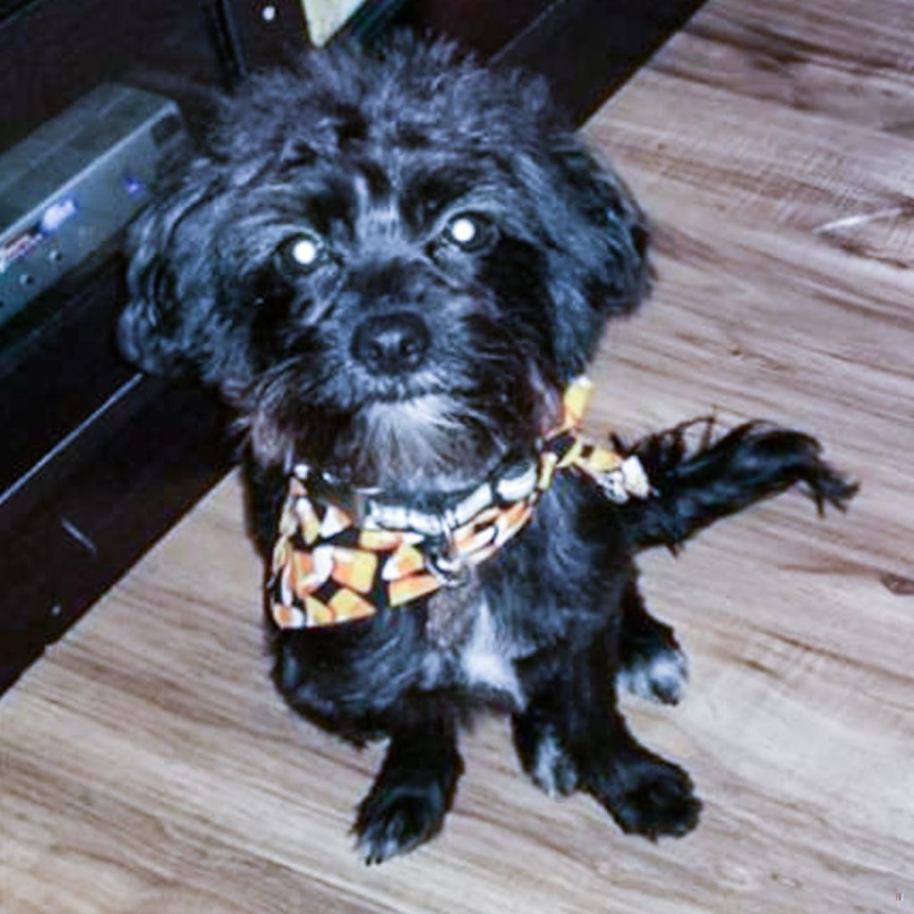 Lost Dog Male Brooklyn Centre Cleveland Oh Usa 44109 Losing A Dog Dogs