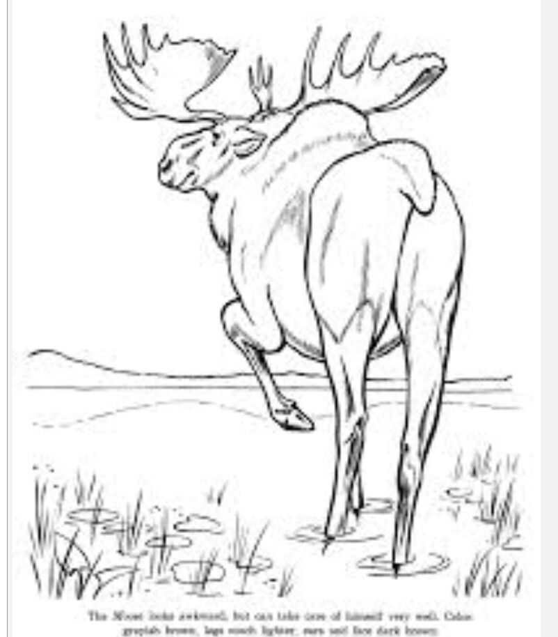 Pin by Patricia Voldberg on Black and Whites   Pinterest   Moose ...