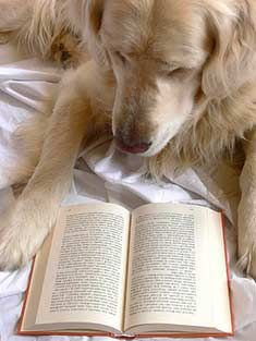 10 Books About Dogs Dog Books Dogs Golden Retriever Mom