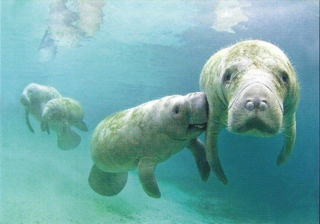 Guided Manatee Sightseeing & Snorkeling Tour