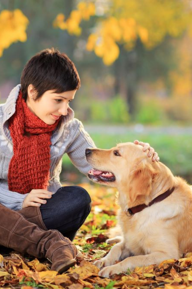 Young Woman In A Park Stroking Her Retriever Dog Goldenretriever Golden Retriever Retriever Dog Dogs