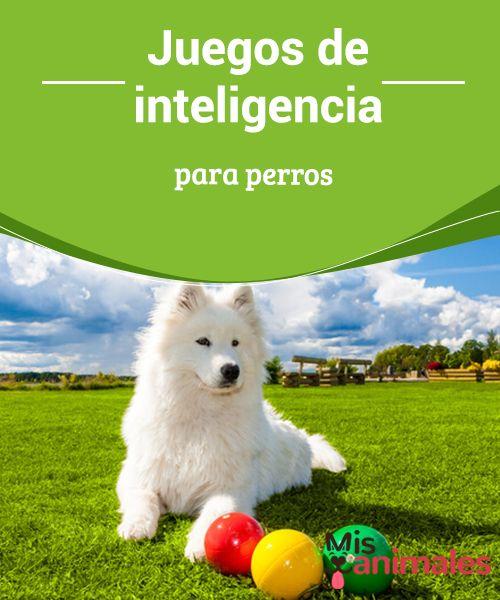 Juegos De Inteligencia Para Perros My Animals Perros Adiestramiento Perros Lenguaje De Los Perros