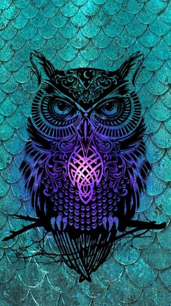 Bho hipster wallpapers  Hipster en 2019  Owl wallpaper