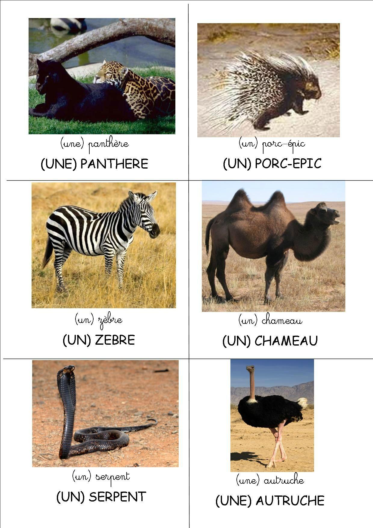 Loto les animaux d 39 afrique crapouillot montessori 6 - Animaux afrique maternelle ...