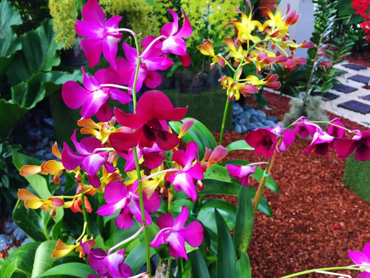 Aibonito Flower Festival In June Site Has Pr Monthly Events Listed News Info For Puerto Rico Flower Festival Tropical Flowers Flowers