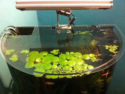 Plexigl Diy Tank Cover Aquarium