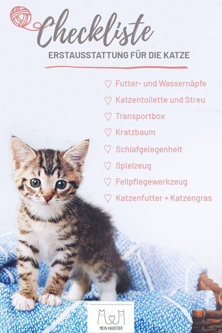 Wenn die Entscheidung für eine Katze gefallen ist, heißt es: Zubehör muss her! Wer noch nie eine Katze hatte, muss sich zunächst die komplette Erstausstattung neu zulegen. Natürlich haben wir noch viele weitere Tipps zur Katzenhaltung auf Mein Haustier. #meinhaustier #katze #katzenhaltung #lebenmitkatzen #stubentiger #erstausstattung #checkliste
