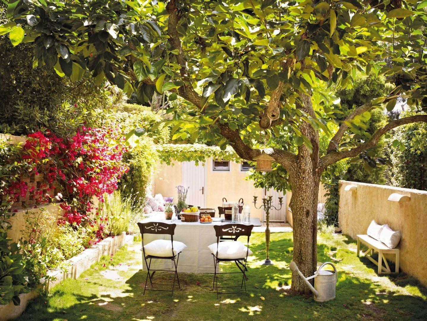 quintal com plantas
