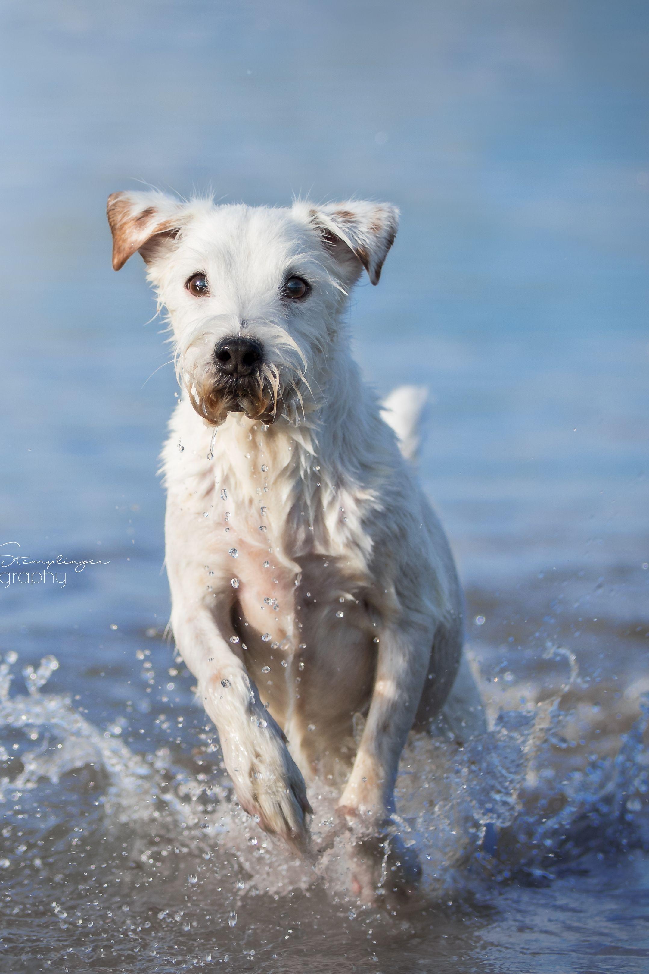 Hundefotos Im Wasser Fotografen Fur Susse Hundebilder In Deiner Nahe Finden In 2020 Hunde Fotos Tierfotografie Hundefotos