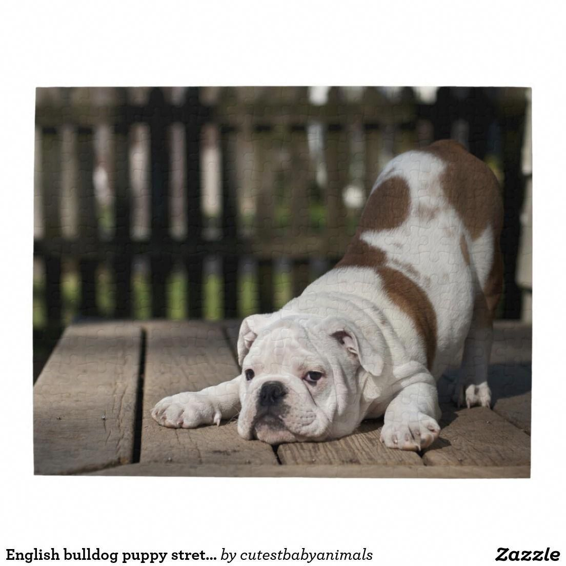 English Bulldog Puppies For Sale – Be Prepared Before You Make a Purchase