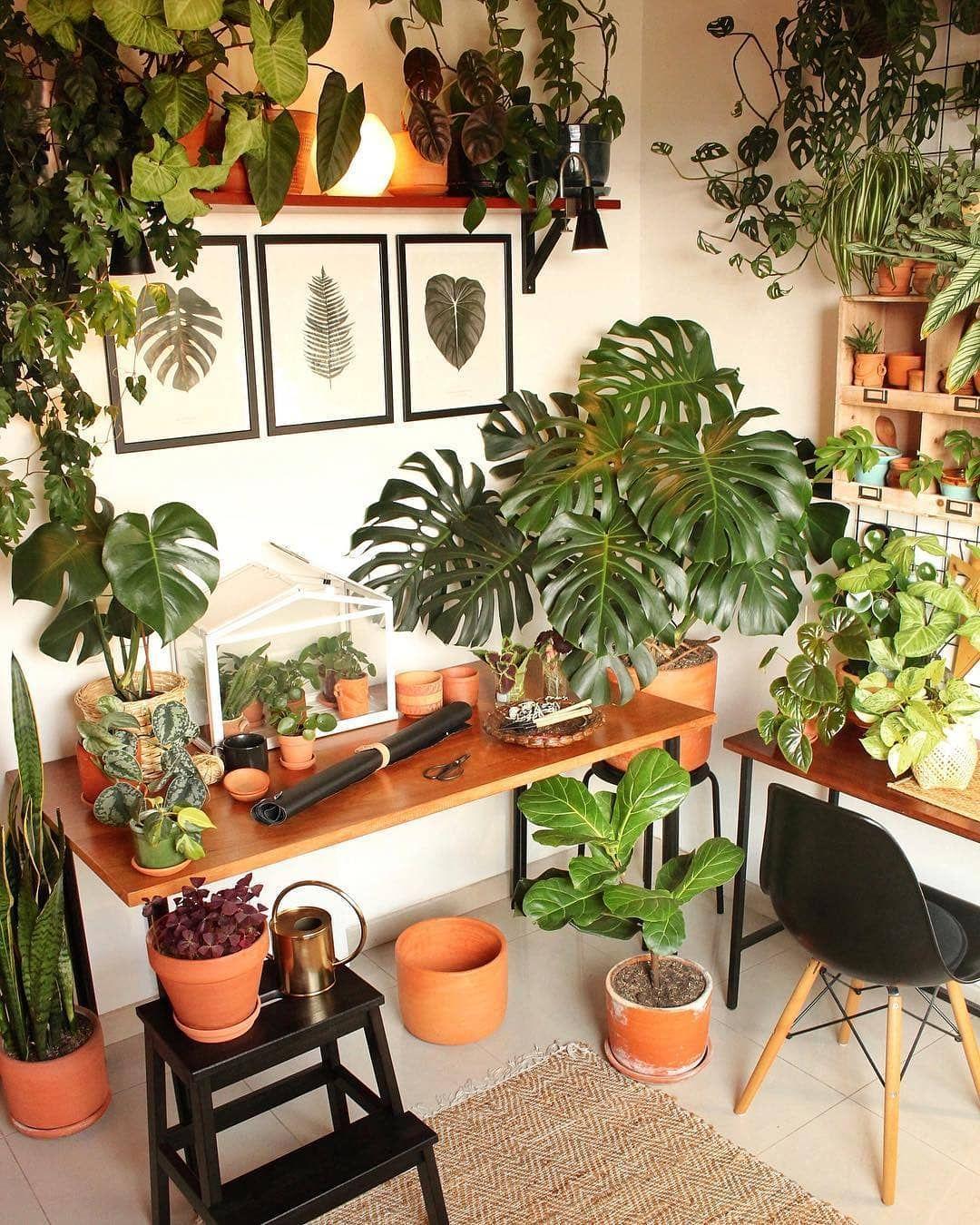 """Homedecor Com: Olivra Homedecor On Instagram: """"The Houseplant Spot Of The"""