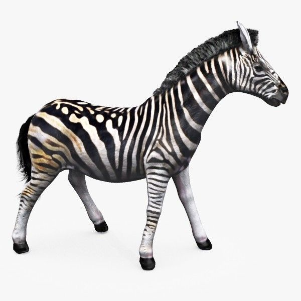 Pin By Michael Taylor On Michaeltaylor3d Models Zebra 3d Model Model